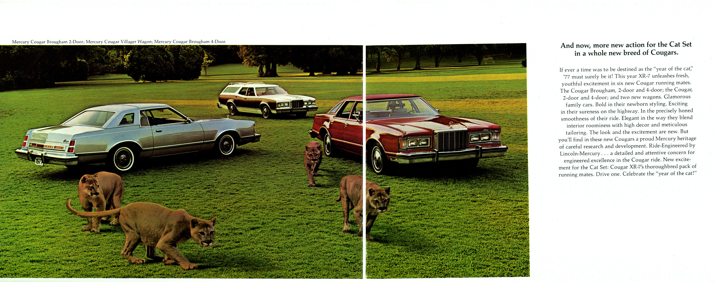 68 20COUGAR 20390 20PICTS further 5293 1997 Mercury Cougar 5 likewise Mercury Cougar further 83merc furthermore 1473666. on mercury cougar